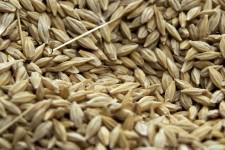 seeds-3713535_1280